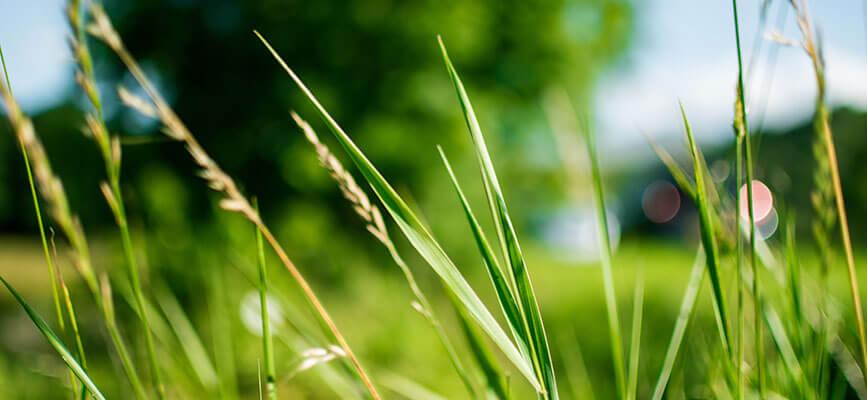 img_grass